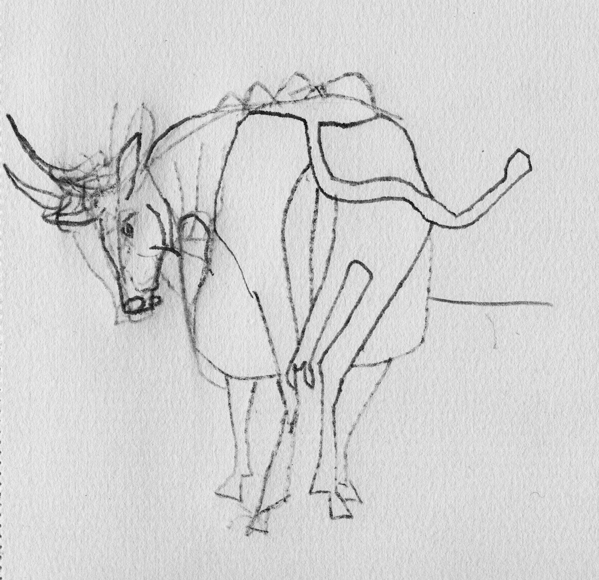 original sketch_taurus